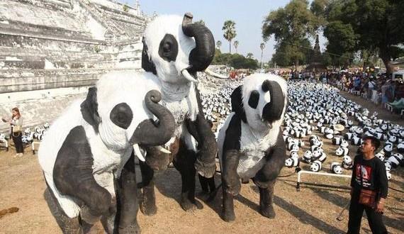 01-elephants_disguised_as_pandas