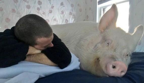 01-home_pig