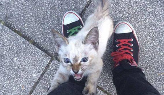 01-kitten_3-25