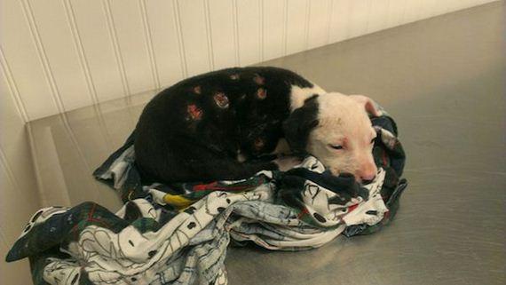 02-firefighter-dog-burn-victim
