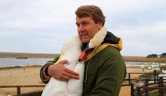 01-Rescued-swan