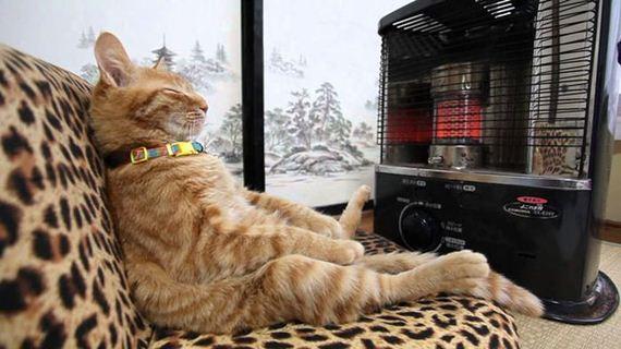01-cats_enjoying_warmth