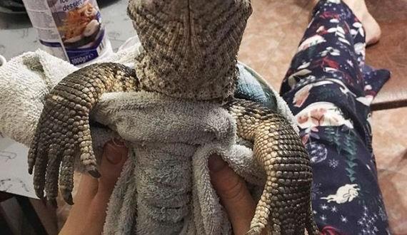 01-cute_lizard