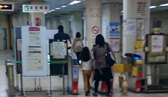 01-underground_dog