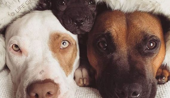 04-rescue_dogs