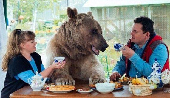 01-bear_family