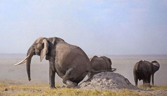 01-elephant_rubs