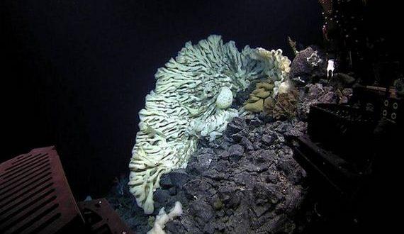 01-largest_sea_sponge