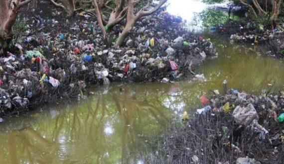 01-mangroves