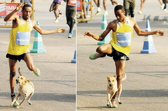 Marathon Runner Loses The Race And Gets Attacked By A Dog ...