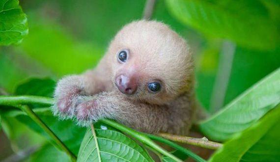 01-sloth_institute_in_costa_rica