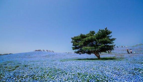 01-spring_in_japan