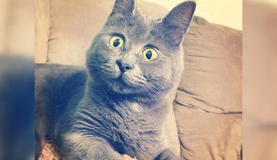 01-surprised-cat-was-told
