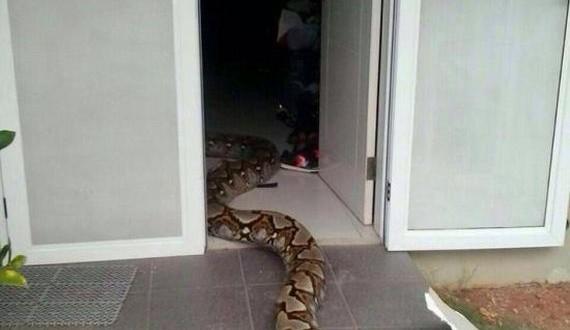 03-huge_snake