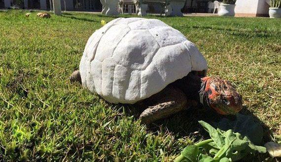 05-tortoise_receives