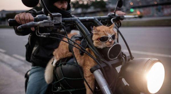 01-Cat-Monday-6-27