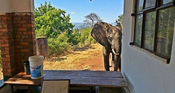 01-elephant_shot_poachers