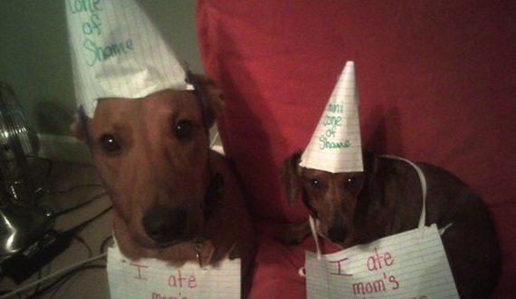 24-Public-Dog-Shaming