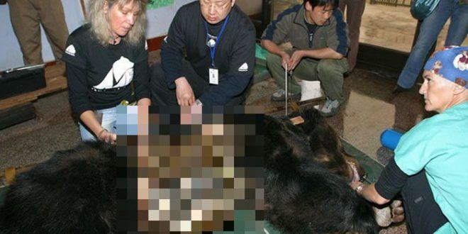 rescued_bear_00