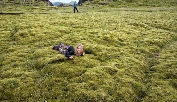 01-moss_in_iceland
