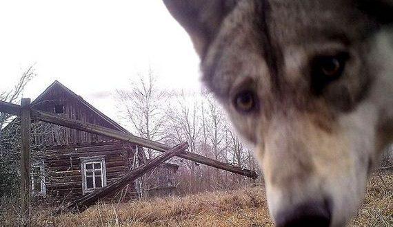 02-animals_in_chernobyl