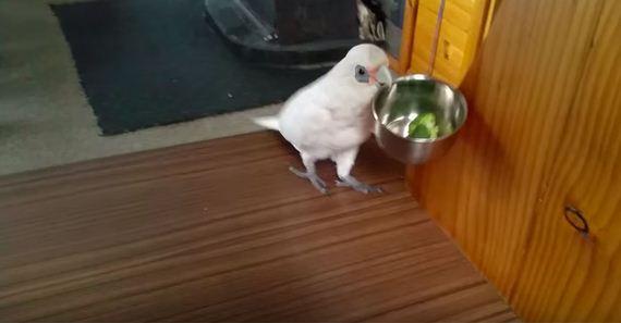 bird-hates-broccoli
