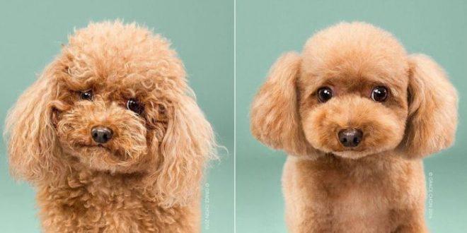 dogs_haircuts_00