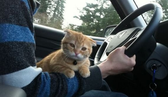 01-cat-road-trip-edition