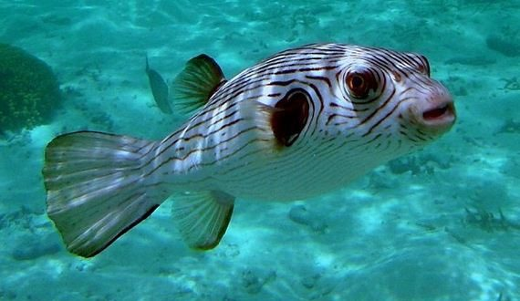 01-narrow-lined-puffer