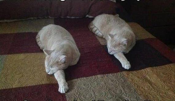 01-olympic-cat-8-17
