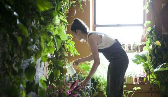 01-plants_in_an_apartment