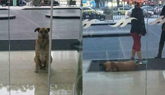 01-stray_dog_adopted