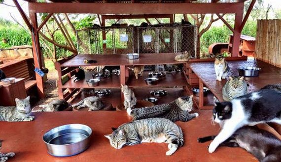 02-cat_sanctuary_in_hawaii_where_people