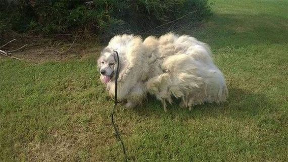 01-dog_grooming
