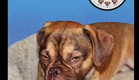 05-grumpiest_dog