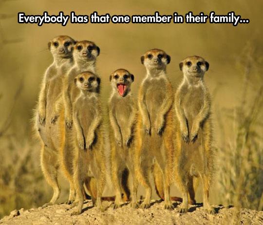 That One Family Member Barnorama