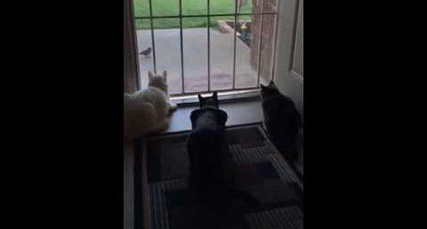 dog-terrifies-cats