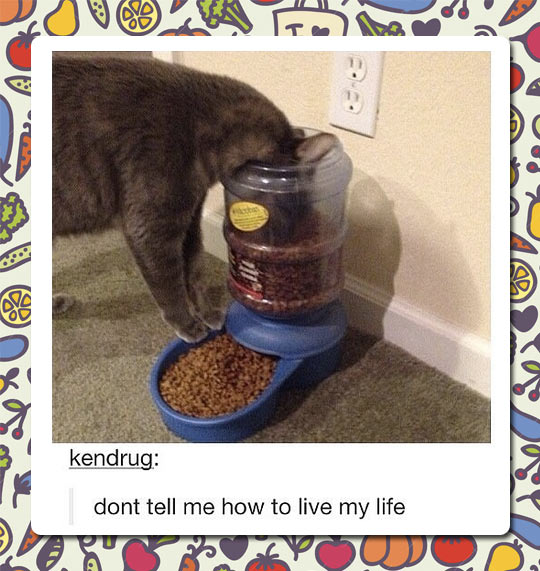 cool-cat-food-device-fail