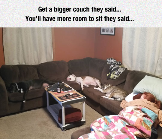 cool-couch-pets-sleeping-wife