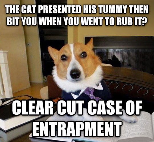 cool-lawyer-dog-cat-entrapment