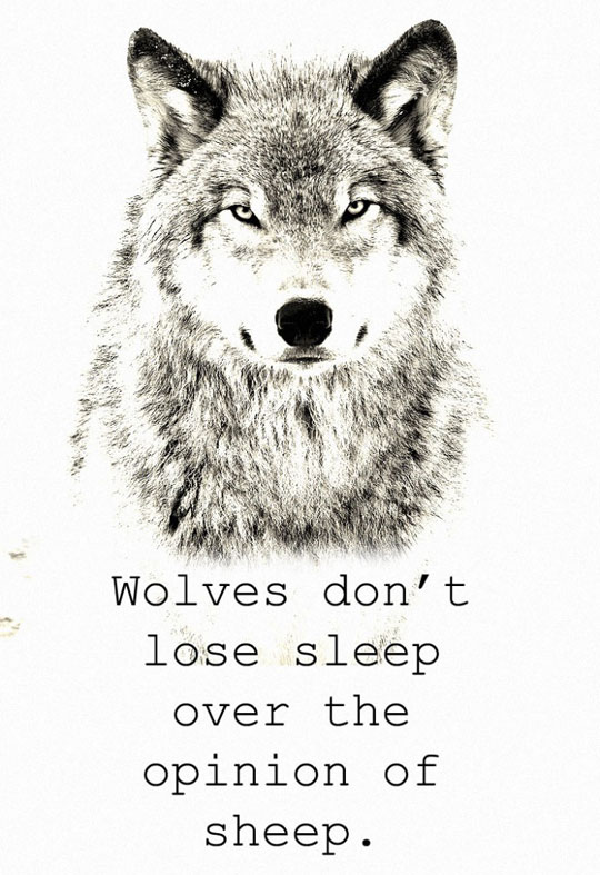 cool-wolves-opinion-angry-sheep