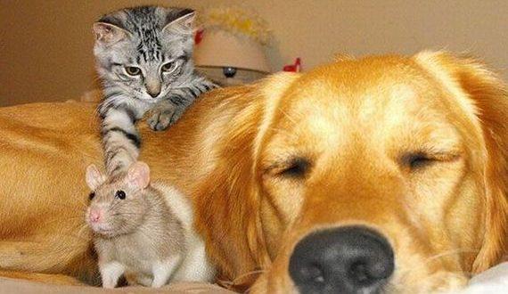 01-adorable-animals