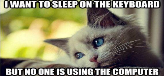 01-cat-memes