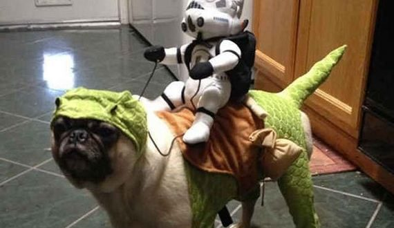 01-dogs-halloween