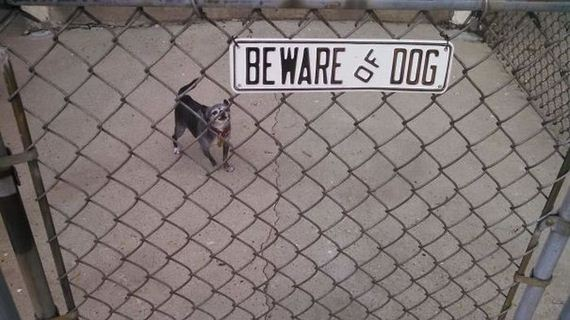 01-beware_of_the_dog_signs