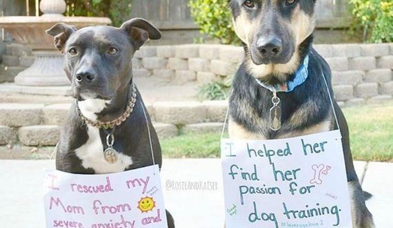 01-rescue-dogs-wear-signs-that-prove-they-werent-the-only-ones-saved