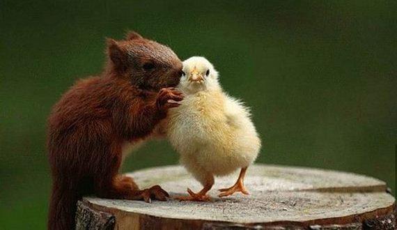 05-unbelievable-animal-friendships