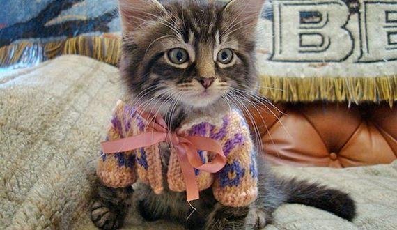 05-cute_animals