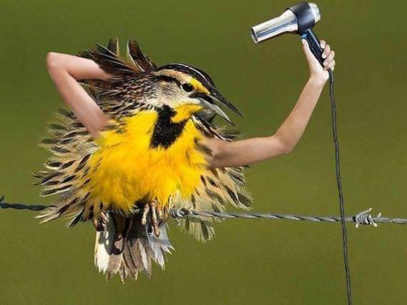 Birds With Human Arms Barnorama