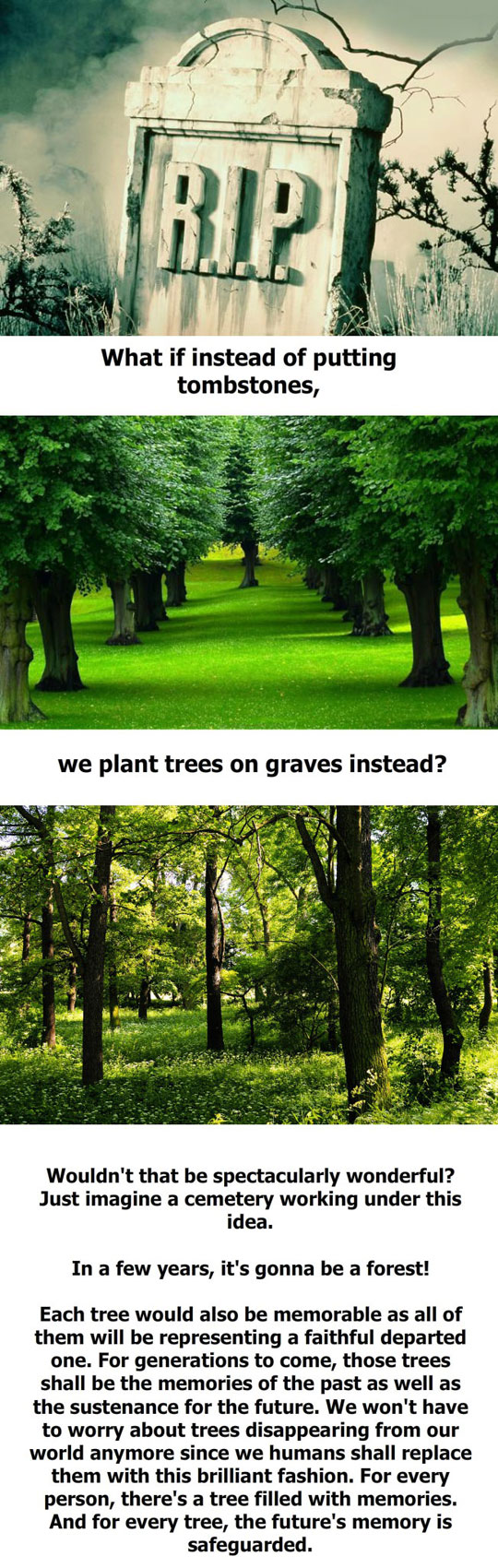 cemetery-idea-planting-trees